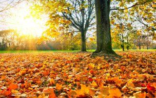 Prag im Herbst Wo Du die Stadt ganz authentisch erleben kannst
