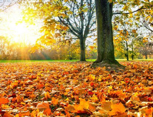 Prag im Herbst: Wo Du die Stadt ganz authentisch erleben kannst